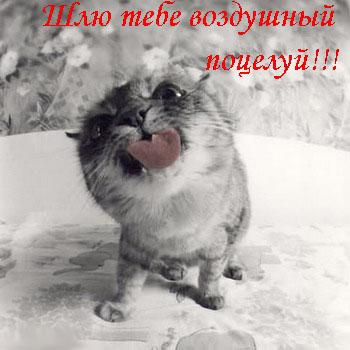 Прикольные открытки с котами